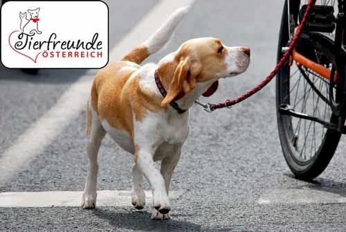 Hunde am Fahrrad – ist nicht erlaubt! – V R S Ö