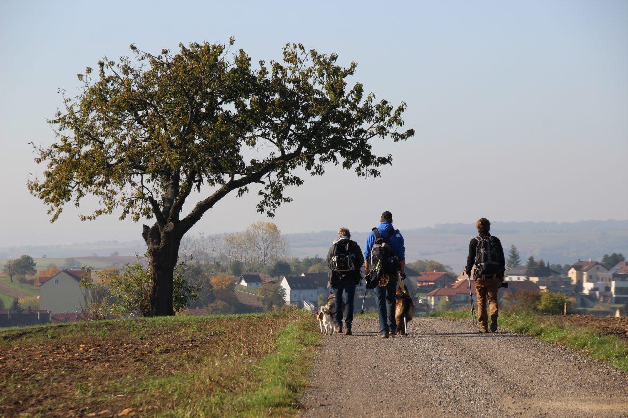 TREKKING & HIKING (LTH-Austria)
